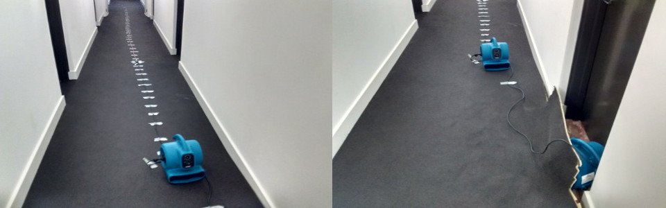 Drying out water damage carpets in Adelaide
