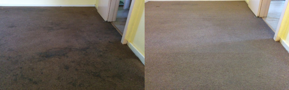 Best Carpet Cleaning Every Time!